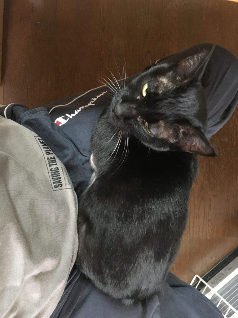 愛猫が膝の上に乗っかる